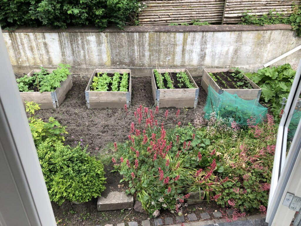Øko køkkenhave grøn